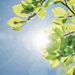Nuovi criteri di sostenibilità per l'ufficio:  lo standard ambientale Level-FEMB